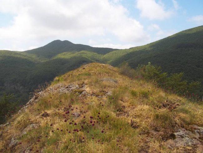 Panorama sul monte Trevine