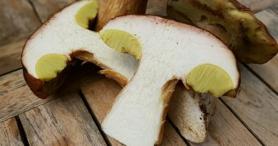Proprietà nutritive dei funghi porcini: 4 buoni motivi per mangiarli serenamente