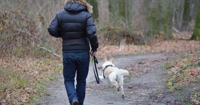Vacanza con il tuo cane: ecco una bellissima proposta