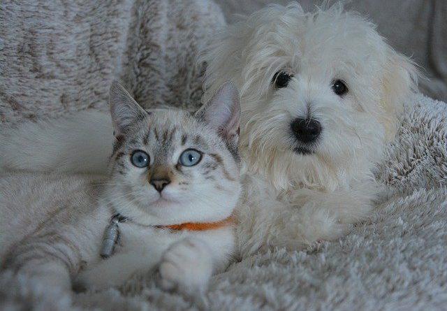 Alimentazione per cani e gatti: due consigli utili per la salute