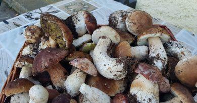 Funghi porcini IGP di Borgotaro: caratteristiche e pregi