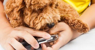 Come, quando e quanto tagliare le unghie al cane (info e suggerimenti)