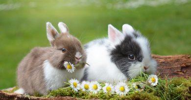 allevamento di conigli nani